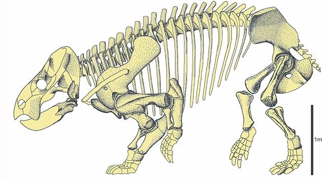 Ritat skelett av Lisowicia bojani.