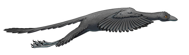 Illustration of Archaeopteryx