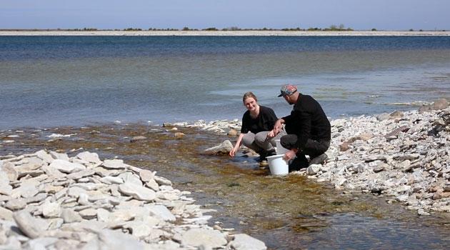 Två personer sitter vid vattnet utanför ar och samlar upp alger i en hink