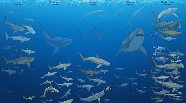 Illustration där mängder av hajar simmar i ett hav.