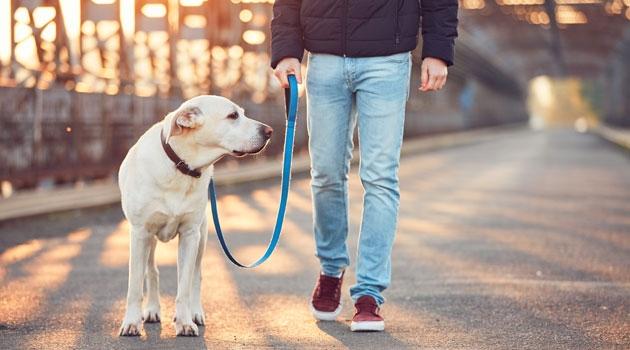 Hundägare på promenad med hund