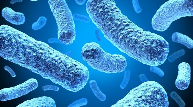 e-coli-bakterier