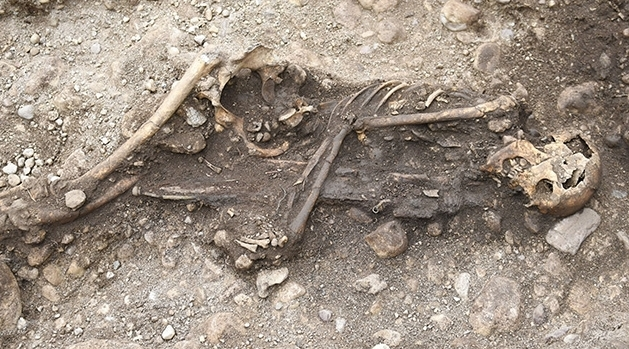 Skelett liggandes på sidan i en grav. Mellan armar och ben håller han ett svärd.