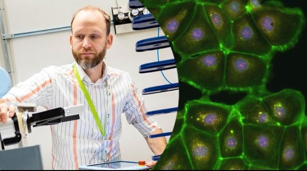 Ola Spjuths forskningsmiljö ska bistå med tjänster för Cell Painting