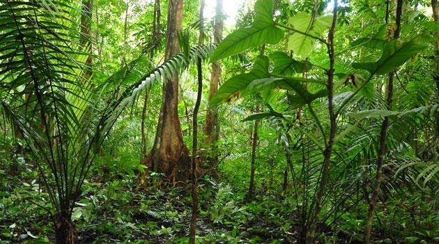 Palmer i djungel