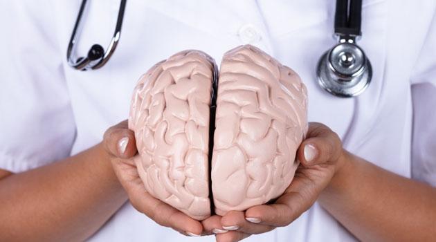 Händer som håller i en modell av en hjärna