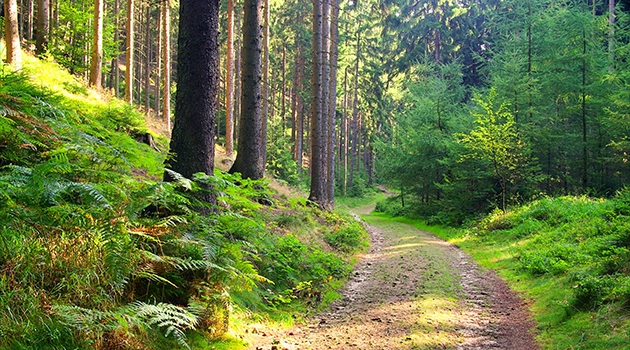 Fotografi på skogsstigen.
