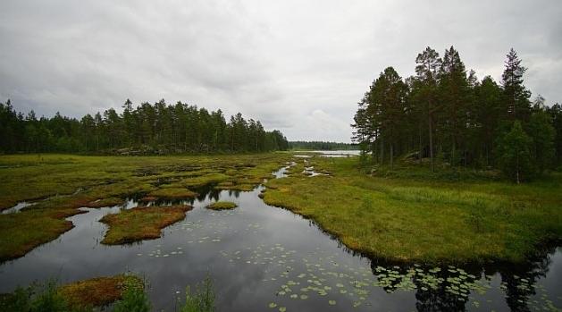 Sjö, våtmark och skog i Värmland