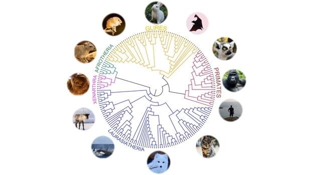 Vetenskaplig grafik som visar hur olika djurarter är relaterade